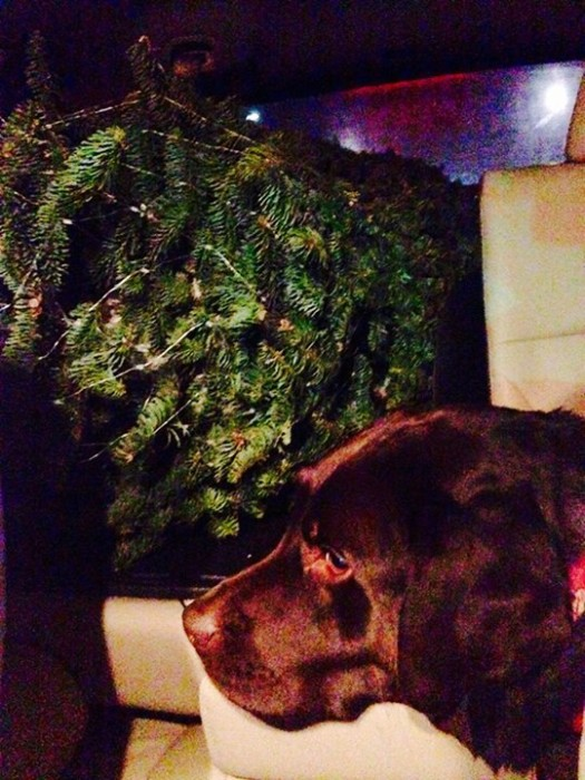 Griswold comes with us every year to help pick out the best tree!